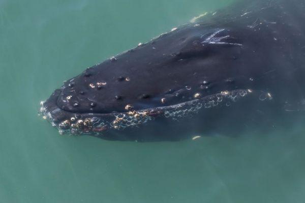 クジラに飲み込まれた男性が奇跡の生還、驚きの恐怖体験とは?