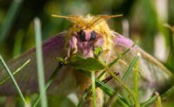 【虫嫌い閲覧注意】美しくて不思議な蛾の世界~ナショナル・モス・ウィーク