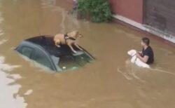 【ベルギー・洪水】住民が胸まで水に浸かりながら、2匹の犬を救助【動画】