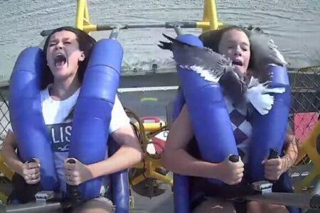 アトラクションに乗っている最中にカモメが衝突、顔にぶつかり女性もびっくり