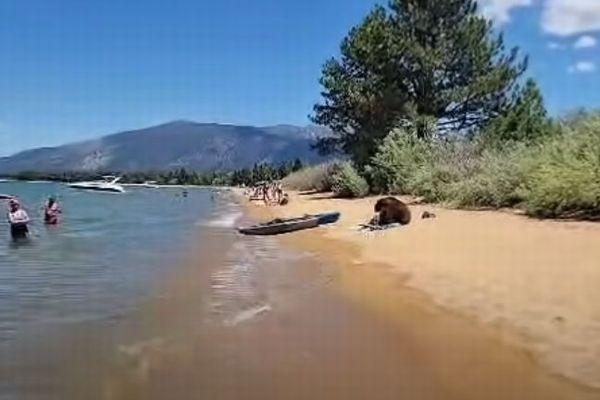 大胆すぎるクマの家族、人間に接近し、湖で親子が水浴び