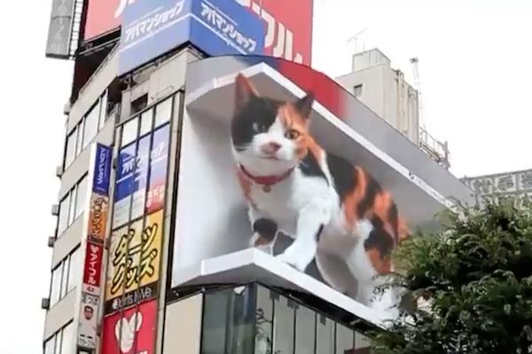 新宿に出現する巨大3D猫が、海外でも話題に