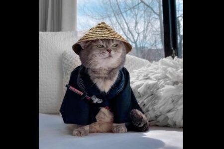 元ノラ猫が、イカしたファッションでインスタの人気者に