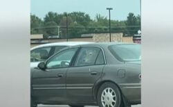 乗用車の後部座席に子牛!目撃した女性もびっくり、思わず撮影
