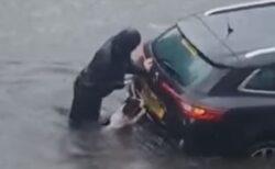水に浸かった車を救うため、飼い主と一緒に押すワンコが目撃される