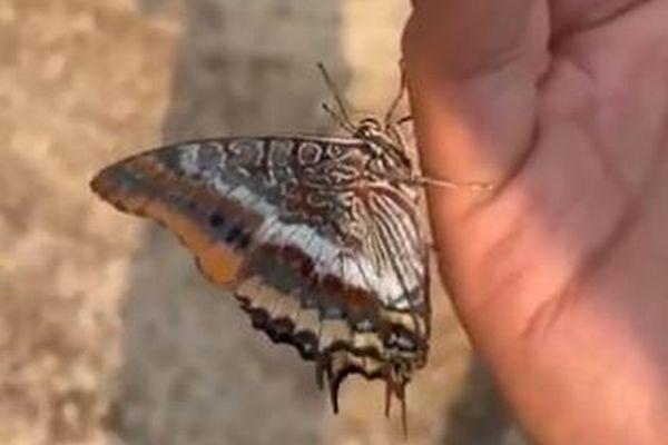山林火災の現場で、喉が渇いた蝶が人間の手にとまり、水を飲む【トルコ】