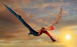 本物のドラゴンか?豪で発掘された巨大な翼竜は、翼の長さが7メートル