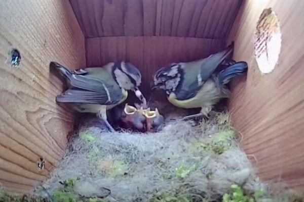 子育てをする鳥の動画が大人気、YouTubeで驚異の4100万回再生