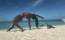 ビーチでヨガをしていた女性が絶叫、突然指をイグアナに噛まれてしまう