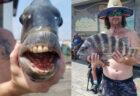 ノースカロライナ州で釣り上げられた魚の歯が、人間そっくり