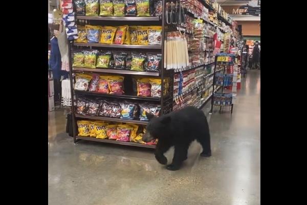ロサンゼルスのスーパーで、クマがお買い物!?【動画】
