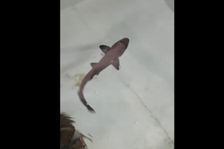 メスのサメしか飼われていない水槽で子供が生まれ、科学者も驚き