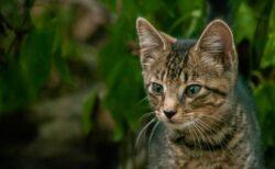 イギリスで過去数カ月に500匹以上のネコが死亡、キャットフードが原因か