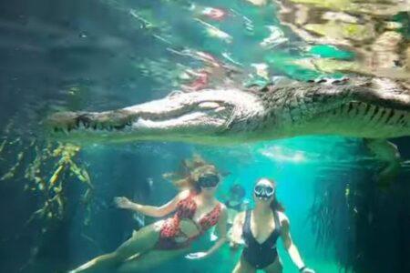 水の中でワニに遭遇、超接近して撮影された動画にドキドキ