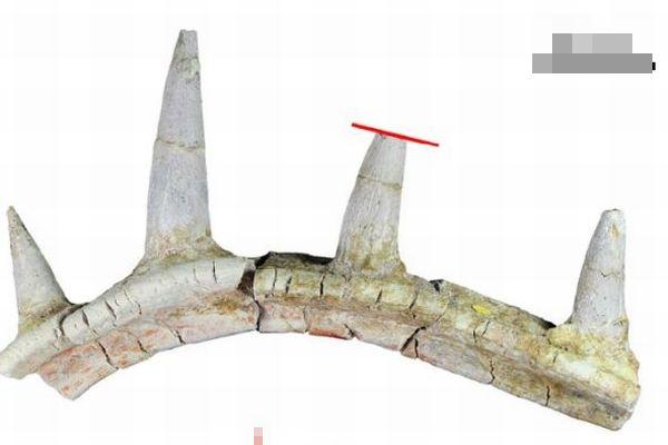 奇妙なアンキロサウルスの化石を発見、トゲが骨格に融合していた!
