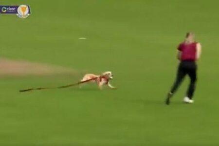 クリケットの試合に犬が乱入、なんとボールをくわえて逃げ回る