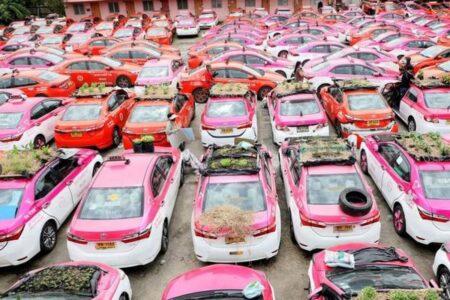 新型コロナの影響で、タクシー会社が車を使って野菜を栽培する事態に【タイ】