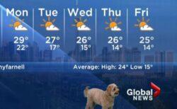 カナダの天気予報にワンコが登場、解説中に画面に映りこんでしまう