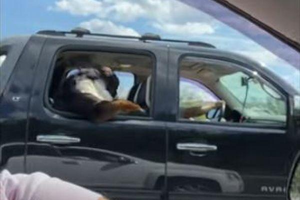 前足で窓の縁にもたれて…車内で人間のように座っているワンコを目撃
