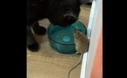 ネズミとネコが現実に仲良くなっちゃった!