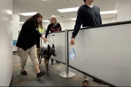 新型コロナを98.2%嗅ぎ分ける犬がドバイ空港で稼働開始、アメリカでもトライアルスタート