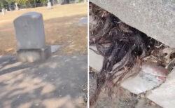 お墓の蓋からはみ出した毛髪を発見、動画が話題に【アメリカ】