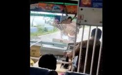 野生のゾウがバスを襲い、フロントガラスを破壊、車内からの映像が恐ろしい