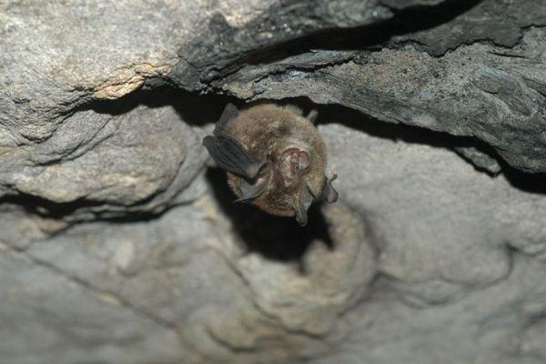 ラオスのコウモリから、新型コロナと95%以上も一致した新しいウイルスを発見