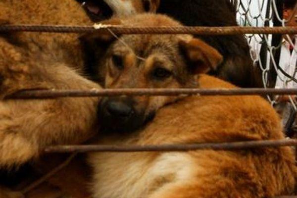 【韓国】文大統領が国内での犬食禁止に言及、すでに3つの市場も閉鎖