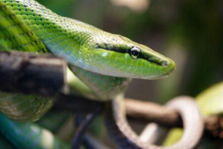 なぜ恐竜が絶滅した時代をヘビは生き抜けたのか?新たな研究結果が示される