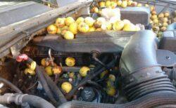ボンネットの中にぎっしり!リスが大量のクルミを車の中に隠す