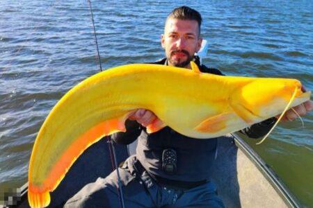 奇妙なまでに鮮やかな黄色い魚、釣り上げた人もびっくり