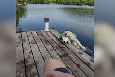 どうしてそうなる?意外な理由で湖に落ちてしまうワンコ