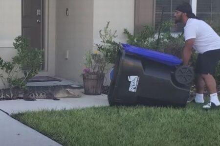 フロリダ州の男性、ワニを大型のゴミ箱に入れ、湖へ逃がす