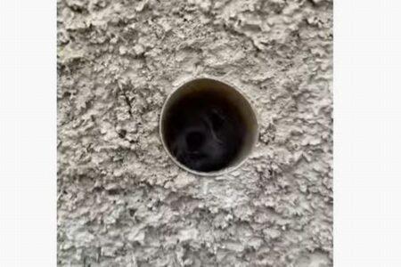 庭の壁にあるパイプを覗くと…ユニークな顔のワンコが現れた!