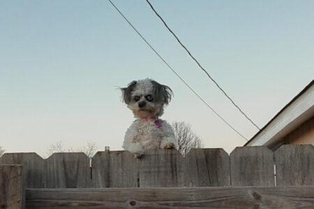 ホラー映画みたいな犬が怖カワイイ!