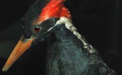 アメリカで23種類の生物の絶滅を宣言、鳥や魚、コウモリ、植物も含む
